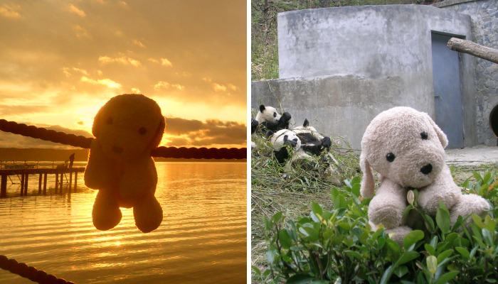 10 New Pictures Of My Cute Stuffed Dog Exploring The World