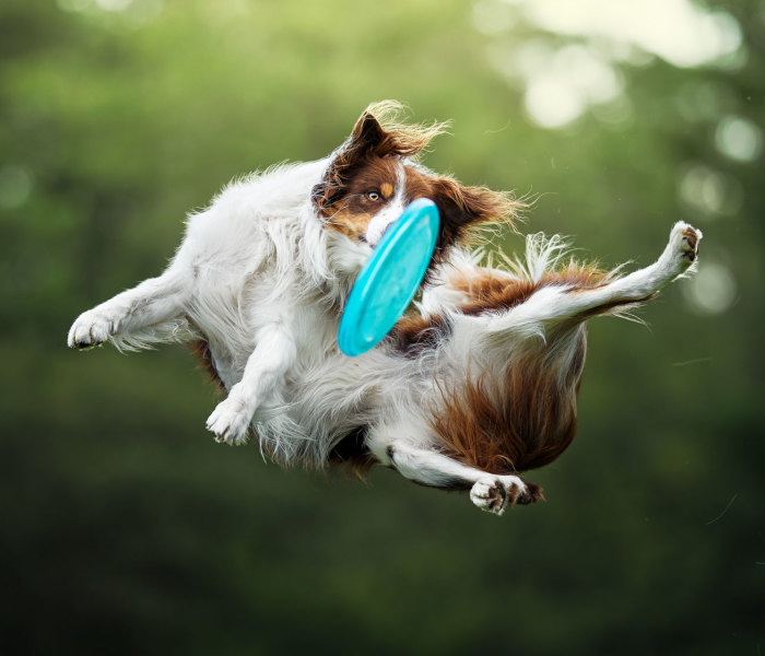 I Photograph Dogs Trying To Catch I Frisbee (12 Pics)