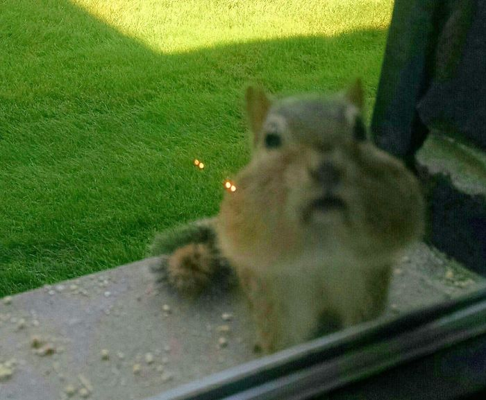 Hello, Your Out Of Birdseed.....refill Please