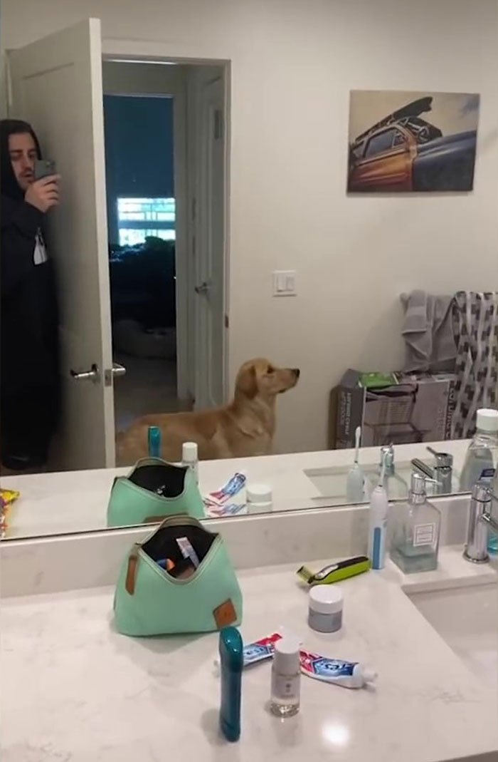 People Are Loving This Golden Retriever's Confused Reaction To Finding His Owner In The Mirror During Hide And Seek