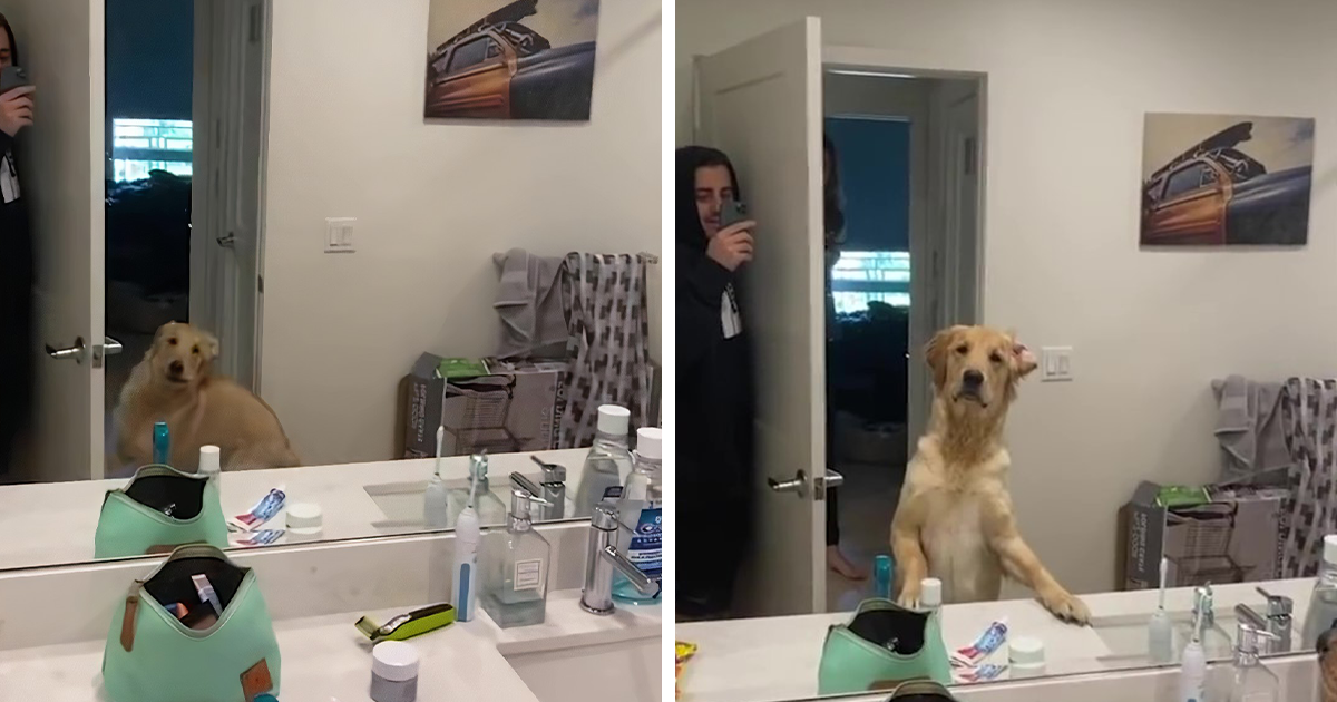 Dog Is Confused By His Human's Reflection In The Bathroom Mirror During A Game Of Hide And Seek