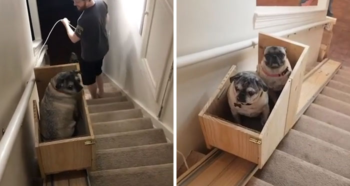 Dog Owner Builds A 'Doggie-Vator' Stairlift For Her Three Elderly Rescued Pugs And People Find It Adorable