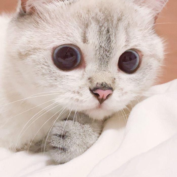Expressive-Cat-Nana