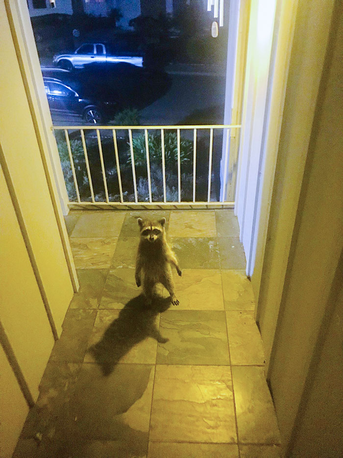 I Came Home Last Night To Find This Thief Just Standing There Menacingly