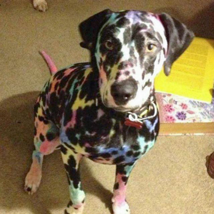 This Is Why You Shouldn't Leave Your Kids Alone With The Dog