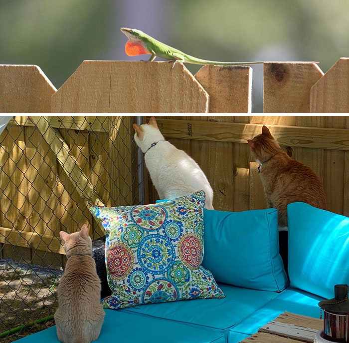 Today's Top News From Isolation: A Lizard Is On The Fence
