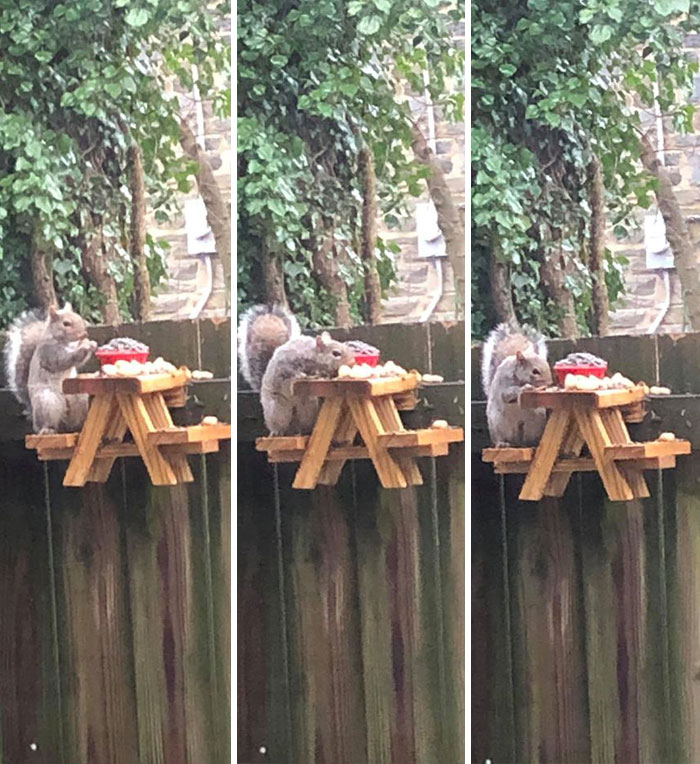 Man Builds Tiny Picnic Table For Squirrels