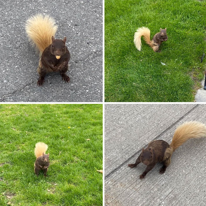 This Squirrel Has A Blond Tail
