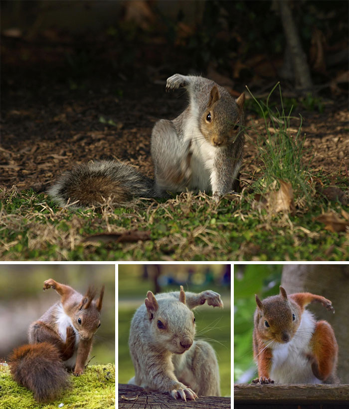 Squirrels Landing On The Ground Look Like Superheroes