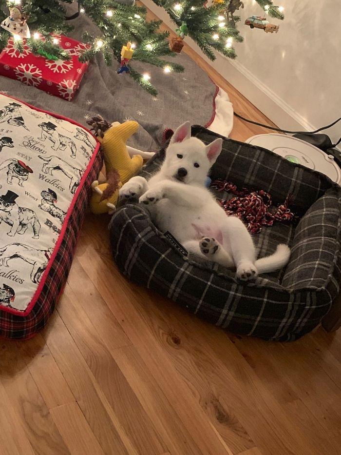 Finnegan's First Christmas!