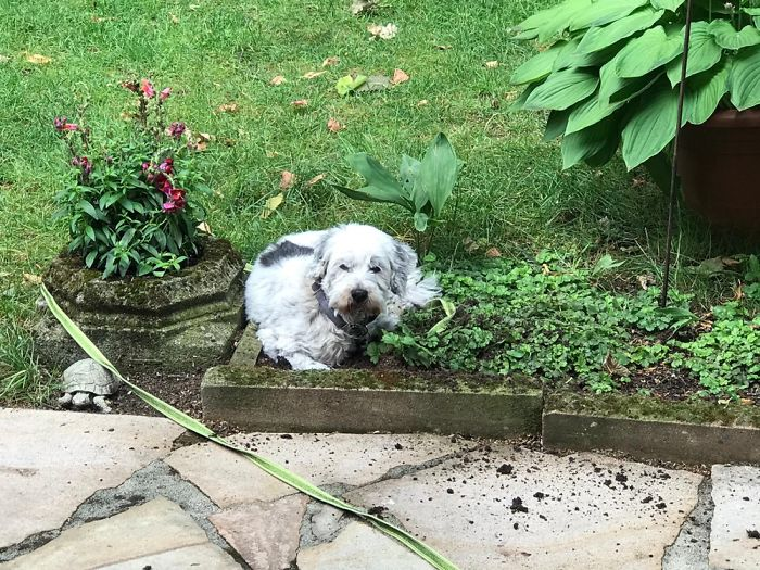 Emma - Loves Relaxing In The Dirt And Looking Fabulous