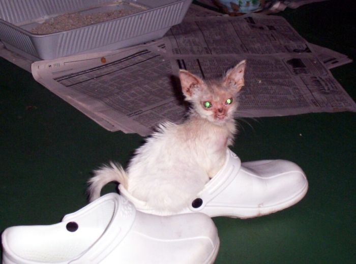 Found With A Broken Eye Socket, Ear Mites, Raging Case Of Ringworm & Starving. He's Beautiful Now