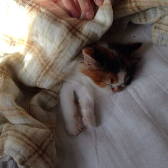 This Was Her 1st Day In My House. Investigated Every Room, Then Fell Asleep Right Next To Me