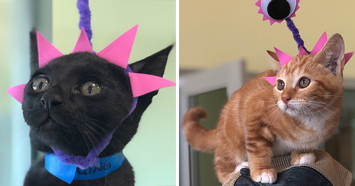 Last Year, This Animal Shelter In Texas Shared 15 Photos Of Adorable 'Aliens' To Boost Their Visibility And Encourage People To Adopt