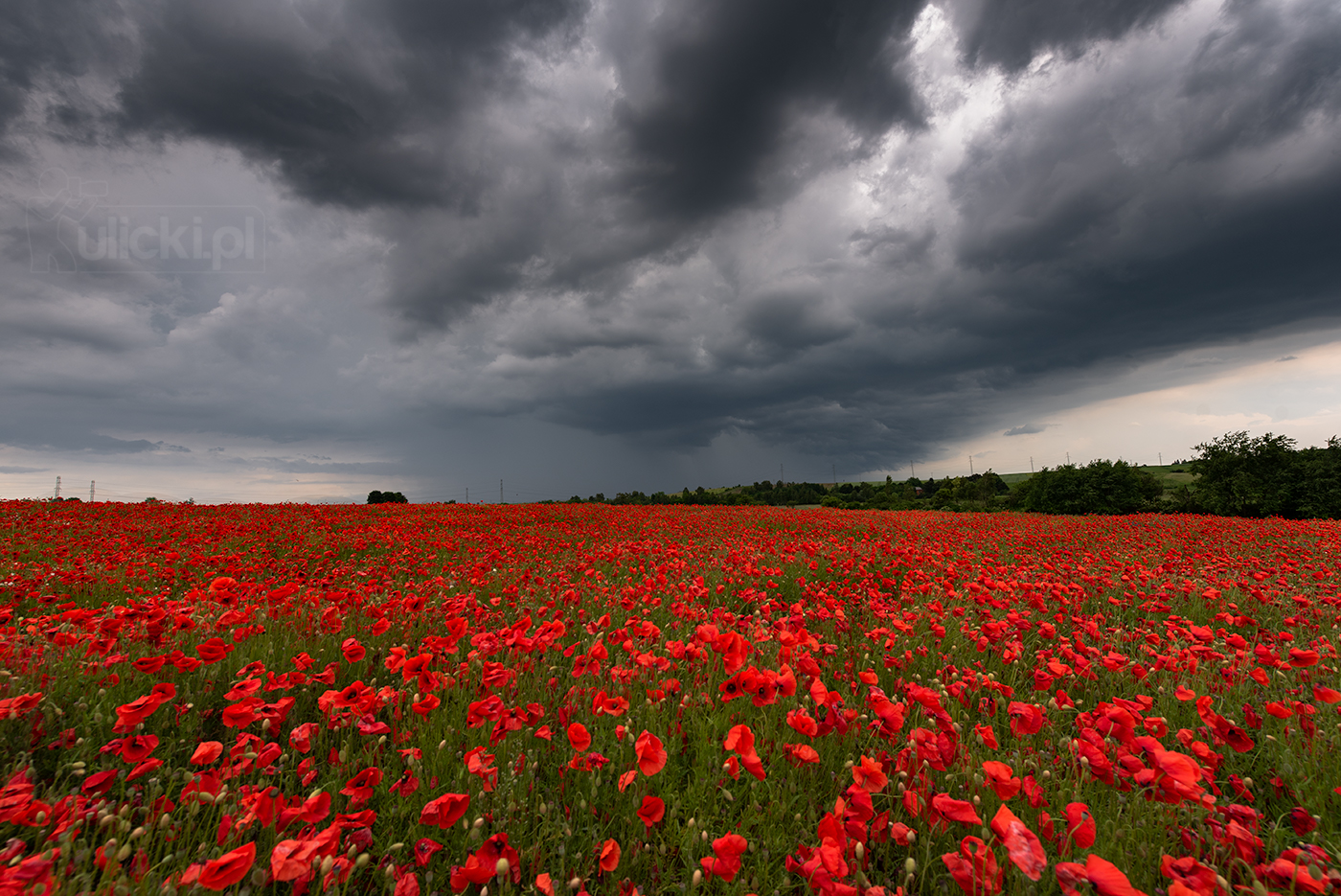 I Photographed Poppy Fields During A Storm (6 Pics)