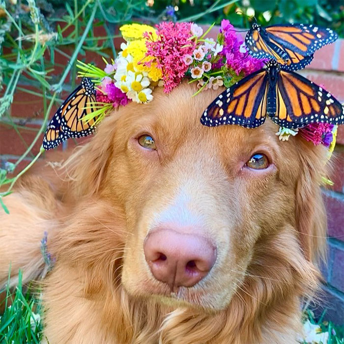 Gentle Doggo Befriends All The Butterflies That Live In His Garden (16 Pics)
