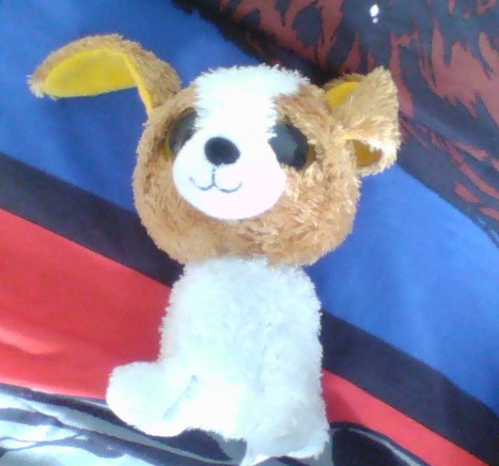 Here's My Favorite Stuffed Toy
