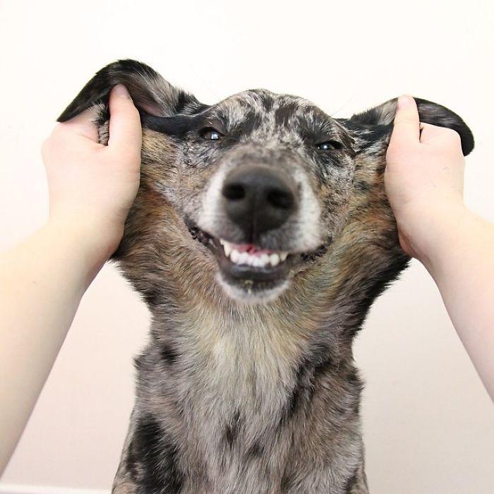Reversed Dog Squish
