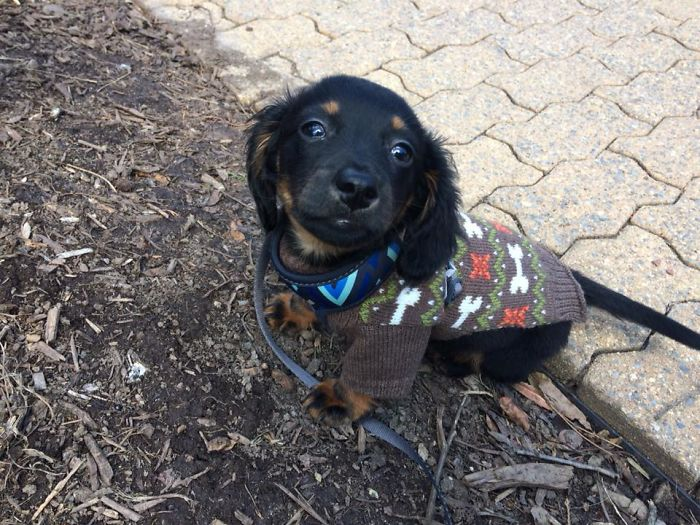 Onix In His First Sweater