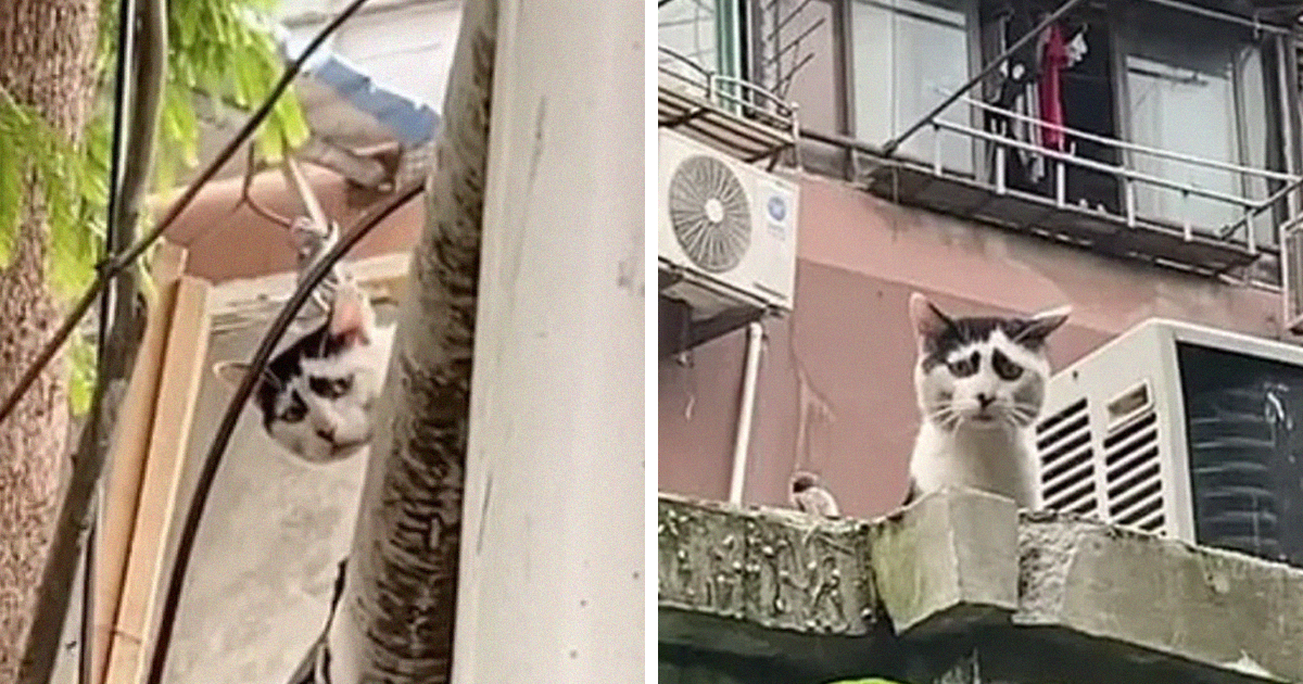 This Cat Is Going Viral For Its Permanently Sad Expression - bored panda