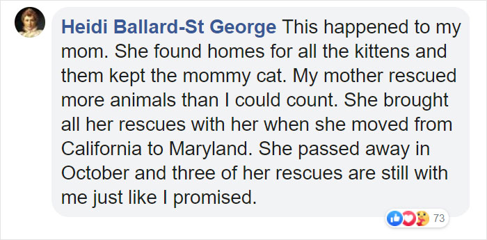 Stray Cat 'Asks' Woman To Let Her Inside So She Can Have Her Babies