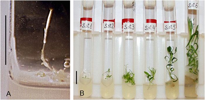 Científicos examinan plantas  que han vuelto a la vida a partir de semillas de 32,000 años de antigüedad
