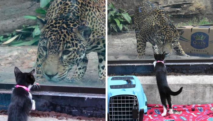 Estos animales de un refugio fueron llevados de excursión al zoo para conocer a sus parientes exóticos