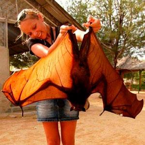 30 Especies de murciélago de aspecto muy extravagante
