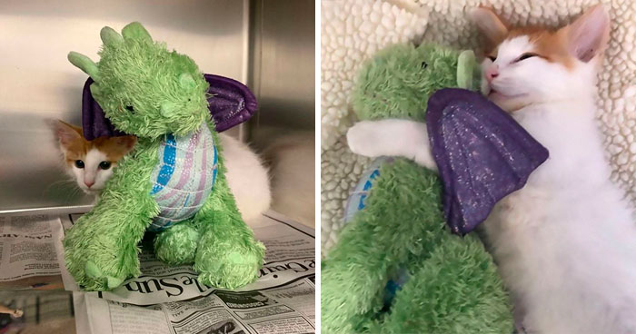 Kitten Brings His Stuffed Dragon BFF To The Vet To Keep Him Safe