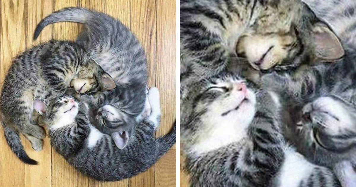 People Are Posting Cats Sleeping Together In The Weirdest Positions And Forming New Shapes (116 Pics)