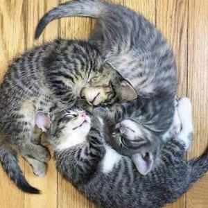 40 Personas que pillaron a sus gatos durmiendo juntos en extrañas posturas y tuvieron que compartirlo
