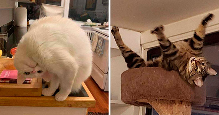 """What's Wrong With My Cat?"" Online Group Has Owners Posting Pics Of Their Malfunctioning Cats And Here Are 50 Of The Funniest Ones"