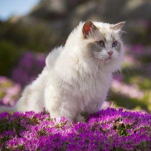 pei meow