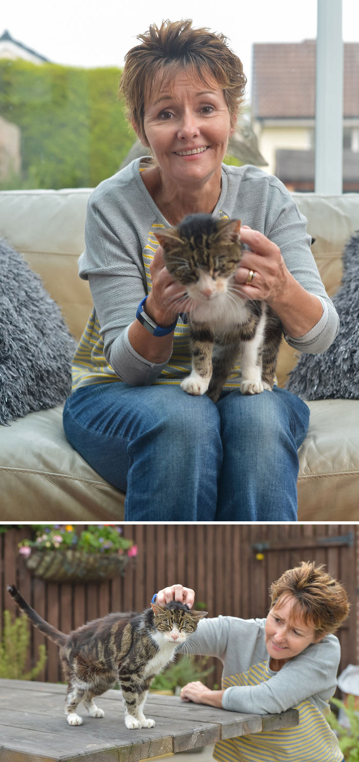 Elderly Cat Finds Its Way Home After 13 Years