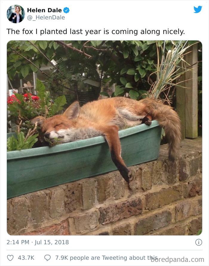 The Fox Flower