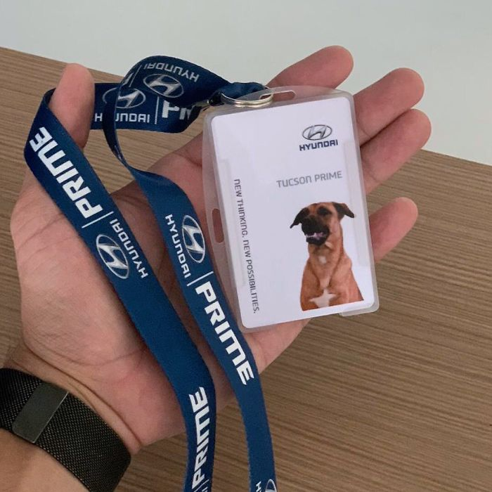 Este perro callejero solía visitar un concesionario de Hyundai, y al final le dieron un trabajo y su propia placa