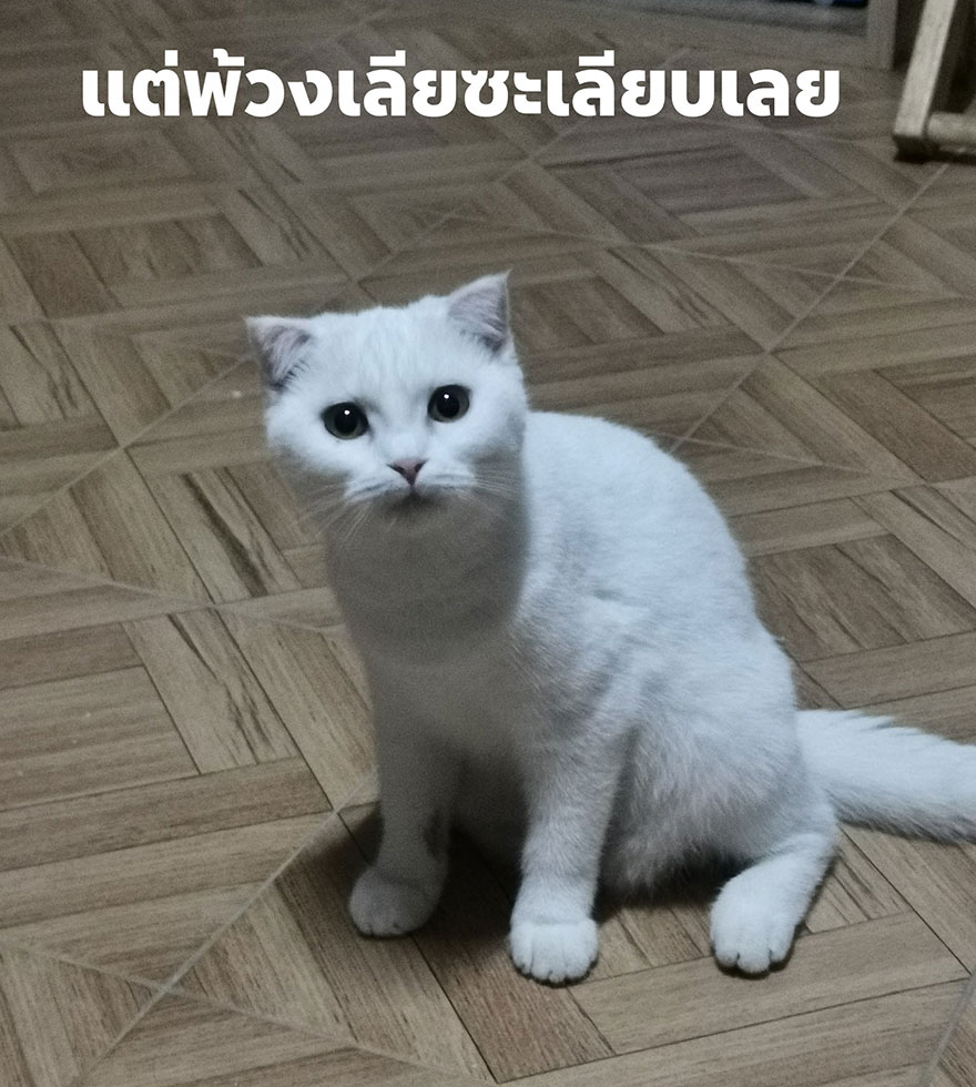 kucing lucu dan menggemaskan pemiliknya