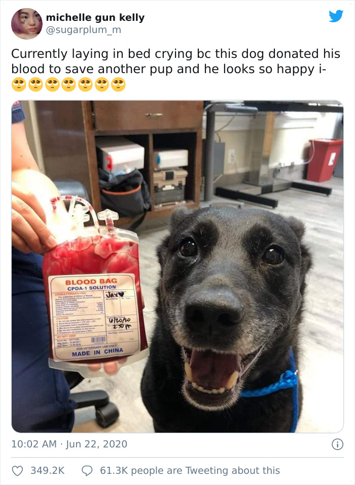 This Dog Donated His Blood