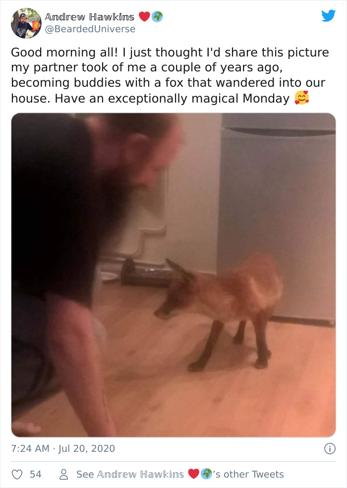 Becoming Buddies With A Fox That Wandered Into Our House