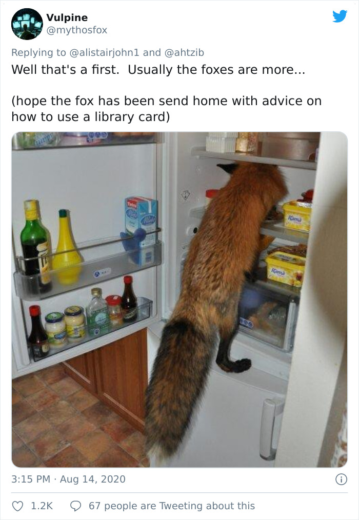 Well That's A First. Usually The Foxes Are More...