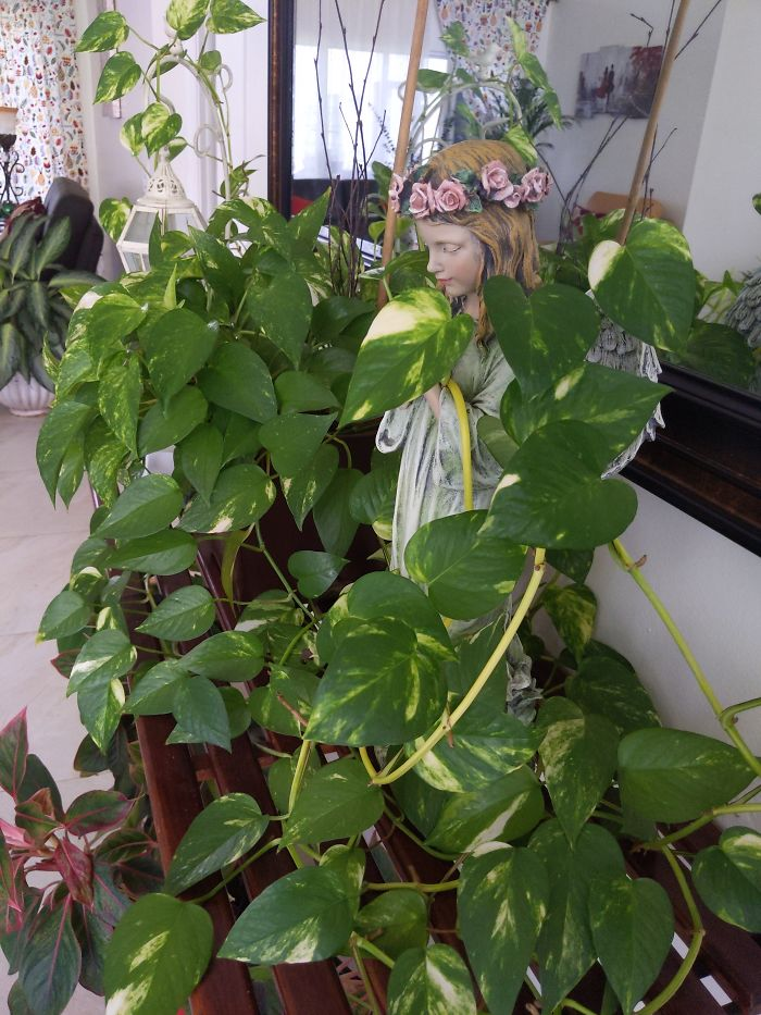 Garden Angel Nestled In My Beautiful Pothos Gold Ivy