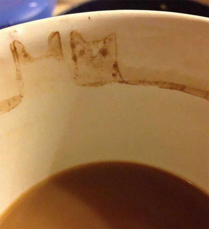 Coffee Stain Cat