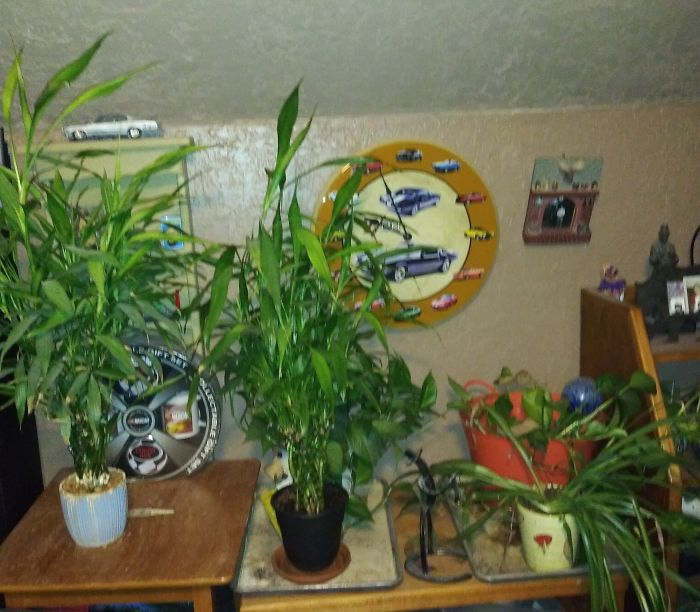 This Is My Dad's Jungle