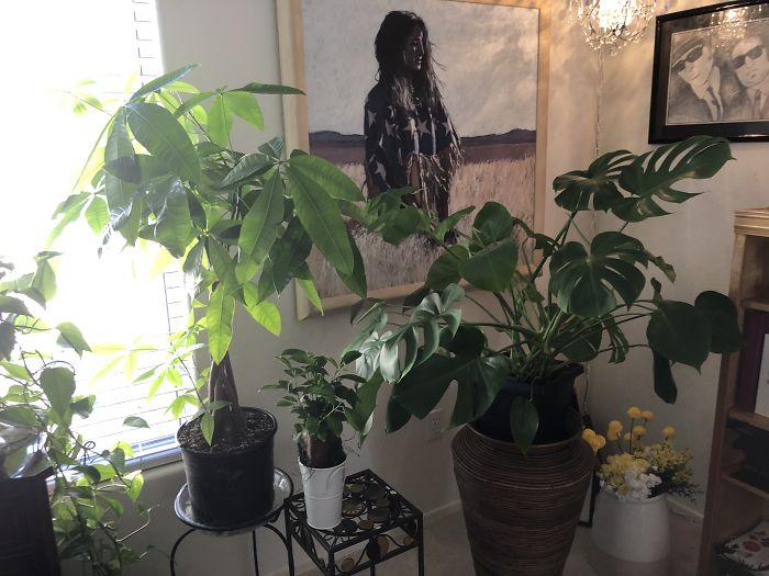 My Happy Plants