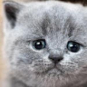 The Upset Kitten