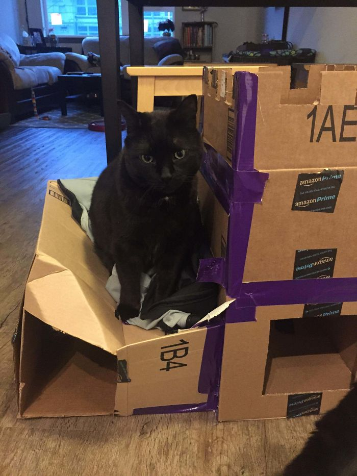 I Made A Cat Fort... It's Not Going So Well.