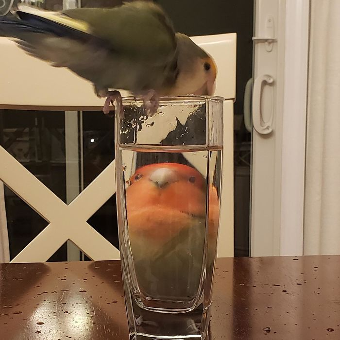 Pets-Animals-Behind-Glasses