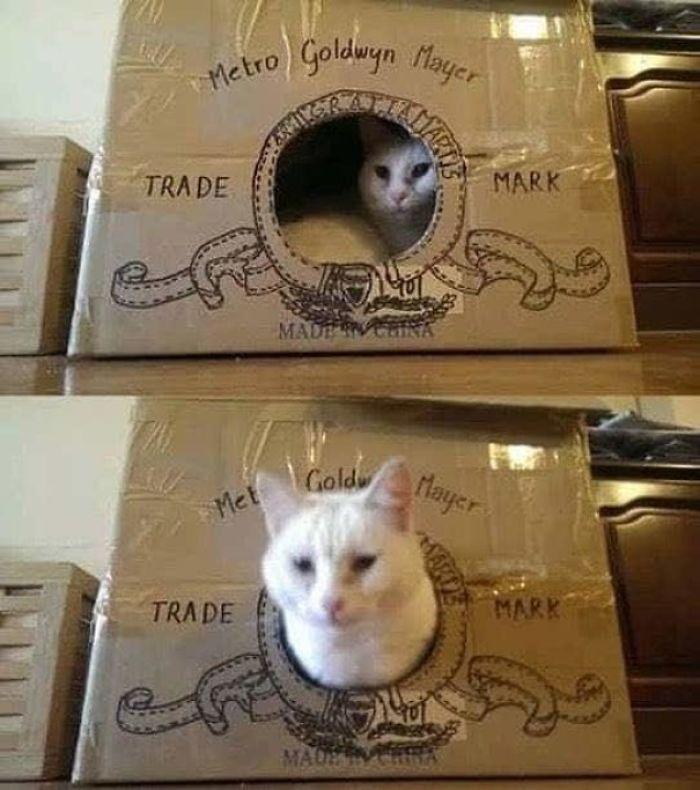Meoww!