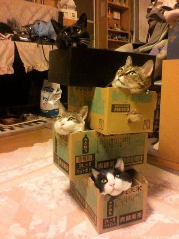 Jenga Cat Fort