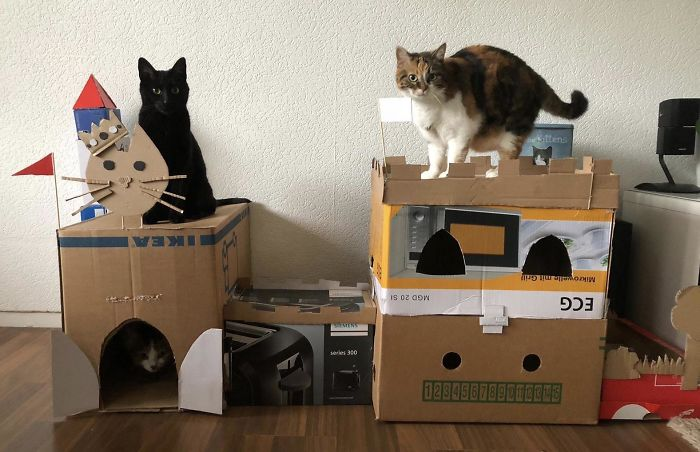 We Built A Cardboard Castle For Our Cats